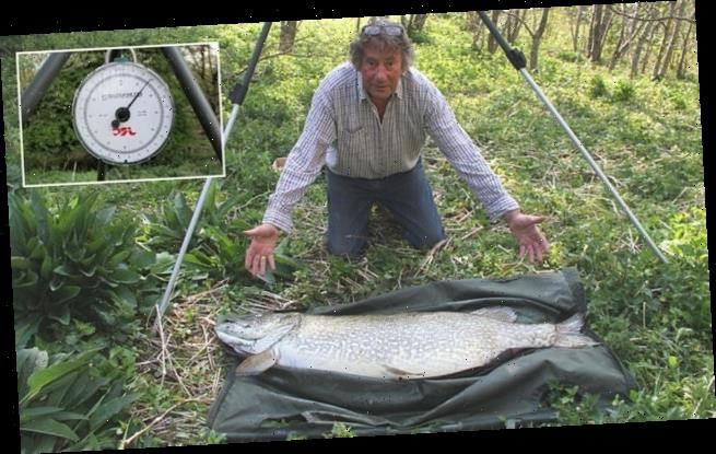 Pike weighing 53lb that would have been British record is found dead